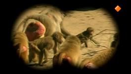 Het Klokhuis - Dierenopvang