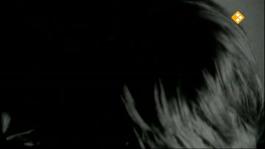 De Nachtzoen - Christiane Berkvens