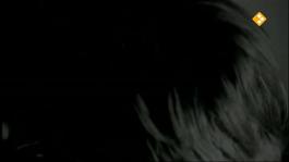 De Nachtzoen - Stef Bos