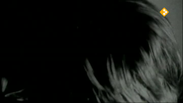 De Nachtzoen - Polo De Haas