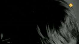 De Nachtzoen - Sergio Felter