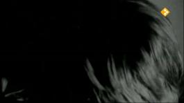 De Nachtzoen - Joel Batenburg