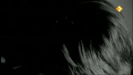 De Nachtzoen - Stephan Sanders