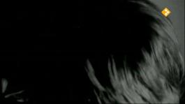 De Nachtzoen - Ivo De Jong