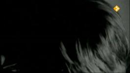 De Nachtzoen - Aat Sliedrecht