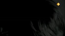 De Nachtzoen - Marc Verstappen
