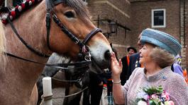 Blauw Bloed De liefde van onze Oranjes voor paarden