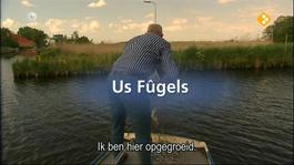 Fryslân Dok - Us Fûgels