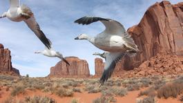 Rail Away - Usa: River Verde - Phoenix - Williams - Grand Canyon