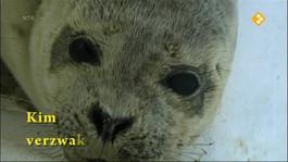 Het Klokhuis - Zeehondenopvang