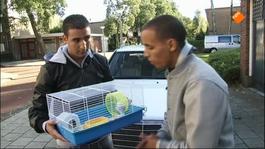 Proefdier - Lucien & Hamster