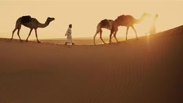 Wild Arabia - Wild Arabia (3) - Drijfzand