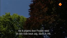 Fryslân Dok - De Vergeten Tuinen Van Gerrit Vlaskamp (1)