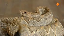 Huisje Boompje Beestje - Slangen