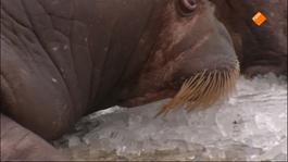 Het Klokhuis - Zeezoogdierbaby