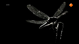 De Kennis Van Nu In De Klas - Robots En Insectengedrag