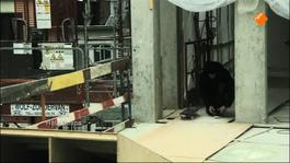 Flikken Antwerpen - King Of Skate