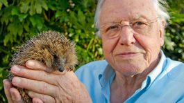 David Attenborough's Rariteitenkabinet - Gepantserde Dieren