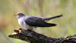 David Attenborough's Rariteitenkabinet - Schokkende Eigenschappen
