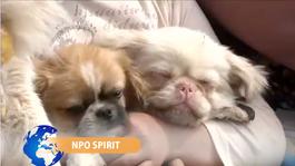 NPO Spirit 2014 Een zegen voor je hond