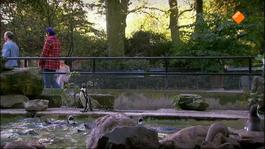 Mega Mindy - De Pinguinjes