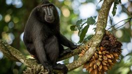 Natuur op 2 Een afspraak met de apen