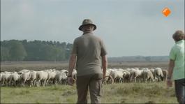 Beestieboys - Beestieboys 5: Dierenkliniek En Herder