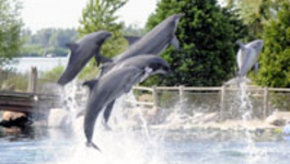 Dekselse Dames - Dolfinarium - Dekselse Dames