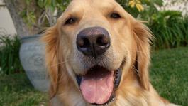 De Buitendienst Van Nieuws Uit De Natuur - De Wolf In De Hond