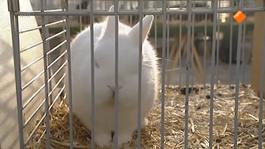De Buitendienst Van Nieuws Uit De Natuur - Dierenrechten