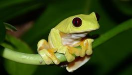 Natuur op 2 Natuur op 2: Attenborough's coole kikkers