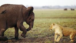 Natuur op 2 Natuur op 2: Titanenstrijd in Afrika