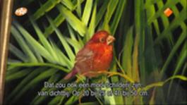 Schilderen Met Gary Jenkins - Tropische Zangvogel