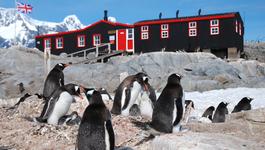 Natuur op 2 Natuur op 2: Pinguïn postkantoor