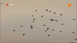 Vroege Vogels Tv - Vroege Vogels