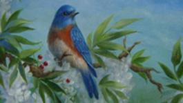 Schilderen met Gary Jenkins Witte regen en blauwkeelsialia
