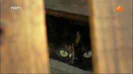 Het verborgen leven van de kat Door de ogen van de kat