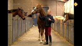 Huisje Boompje Beestje - Mijn Pony Heet Nathalie