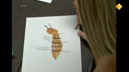 Huisje Boompje Beestje - Steekbeesten