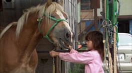 Zapp Echt Gebeurd - Een Paard Voor Mij Alleen