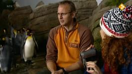 Huisje Boompje Beestje - De Pinguïn