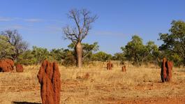 Nature's Microworlds - Australië's Rode Centrum
