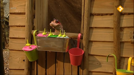 Koekeloere - Ijsje Gezond