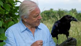 David Attenborough's Rariteitenkabinet - Nieuwsgierige Karakters