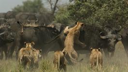 Nature's microworlds De Okavango Delta