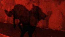 Het Uur Van De Wolf - The Lady In Black