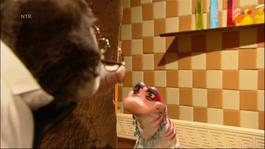 Koekeloere - Een Kijkje In De Keuken
