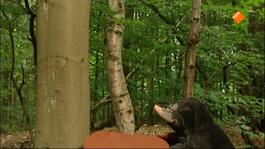 Koekeloere - De één Kan Dit, De Ander Dat