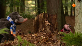 Koekeloere - Stekelmuishoorn