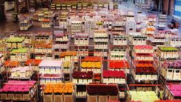 Holland Doc - Een Bloeiende Handel